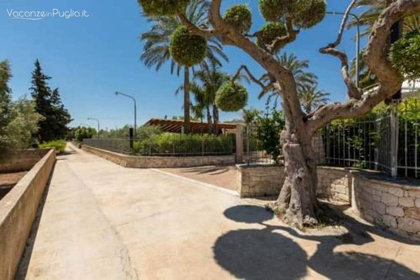 Palme Da Vaso Per Esterno il giardino delle palme - vacanze in puglia